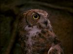 ewok_adventure_owl
