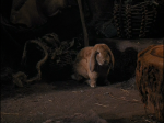 ewok_adventure_rabbit